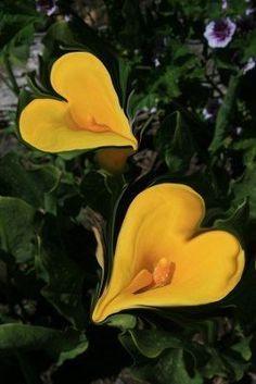 Lotus Chick