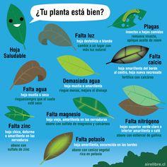 Eco Garden, Garden Deco, Home Vegetable Garden, Garden Care, Organic Gardening, Gardening Tips, Plante Carnivore, Little Gardens, Planting Vegetables