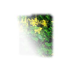 aeroceci ❤ liked on Polyvore