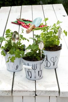 Create your own little indoor herb garden so you'll always have fresh herbs available