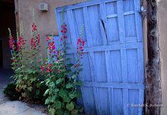 Hollyhocks and blue door, Santa Fe, New Mexico  Hollyhocks and blue door, Santa Fe, New Mexico  COPYRIGHT:© Randall K. Roberts