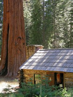 Forget the cabin - I want to live in THAT TREE!!!