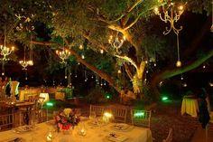 Hacienda Dzibikak - under the big tree