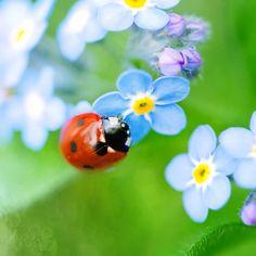 Lady Bug, Lady Bug..... fly away home......
