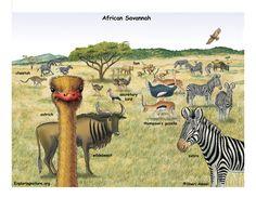 African grasslands... Ozzy's Preschool Park