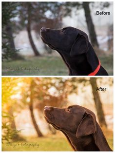Editing Pet Photos in Lightroom the quick and effective way!