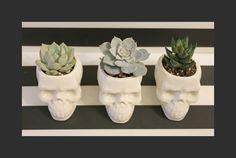 Skull Decor, Goth Skull Planter, Cactus Planter, Boho Planter, Minimalist Planter, Happy Planters, Cactus Pot, Indoor plant pot by HappyPlanters on Etsy https://www.etsy.com/listing/265895255/skull-decor-goth-skull-planter-cactus