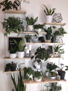 Indoor Plants Plant Wall Wall Decor DIY Plant Decor Wall Living Room Decor Sukkulenten What is Decoration? Decoration could … Diy Wall Decor, Diy Room Decor, Living Room Decor, Home Decor, Wall Decorations, Tv Decor, Living Rooms, Bedroom Decor, Room With Plants