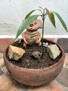 """""""Como las flores, creciendo..."""" y como mi palo de mango también!!!"""