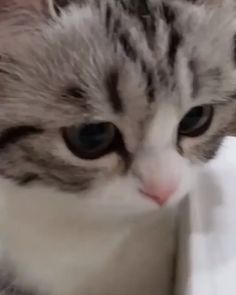 Love this cat's expressions, and its large uncertain eyes. Cute Baby Cats, Cute Cat Gif, Cute Little Animals, Cute Cats And Kittens, Cute Funny Animals, I Love Cats, Kittens Cutest, Funny Cats, Ragdoll Kittens