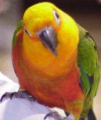 Parrot Parrot Education Site