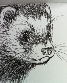 Another coal drawing. Ferrets are concentrated cuteness and if I wouldn't highly doubt I could invest enough time to take care of one I'd get one (and its name would be Ashmodai or Asmodeus). More ...