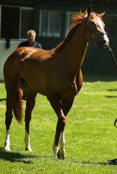 California Chrome won the 2014 Kentucky Derby and Preakness Stakes but fell short in the Belmont, finishing fifth.