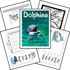 FREE Dolphin Unit Study and Lapbook - Would be fun to use with the Dolphin Tale movies and a trip to the aquarium. Middle School Science, Elementary Science, Science Classroom, Science Fun, Classroom Ideas, Dolphin Tale, Ocean Activities, Material Didático, Ocean Unit