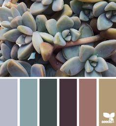 Succulent Tones - http://design-seeds.com/index.php/home/entry/succulent-tones15