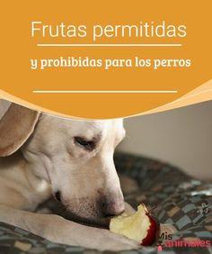 Frutas permitidas y prohibidas para los perros Si prefieres dar a tu perro algo de comida casera te recomendamos la frutas permitidas y prohibidas para los perros. #frutas #prohibidas #permitidas #salud