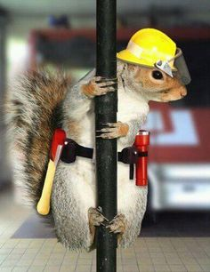 Superman was a news journalist.....Supersquirrel a firefighter?.....Or is he undercover again!?