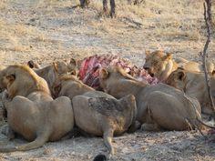 Kruger, Sudáfrica Kangaroo, Animals, Travel Agency, Baby Bjorn, Animales, Animaux, Animal, Animais