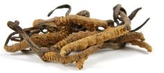 Cordyceps is a mushroom used in Traditional Chinese Medicine that is touted to be anti-aging and pro-vitality; these quite vague claims have not yet been looked at in human interventions. It can regulate testicular testosterone production, but has complex mechanisms.