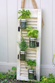 We end up having two to three shutters rotting in the backyard or lying uselessly in the attic; if you to use them for something really good, get ideas from this lovely woman. She has incredible ideas to transform the old shutters. Mason Jar Herbs, Mason Jar Herb Garden, Diy Herb Garden, Garden Art, Garden Design, Mason Jars, Garden Pallet, Vegetable Garden, Herbs Garden