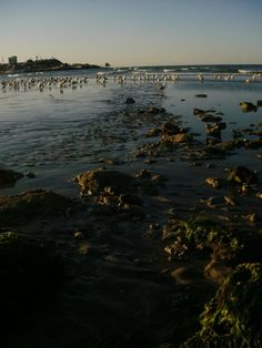 Low tide in Puerto Penasco (Rocky Point), Sonora Mexico - Amy Barnett photo