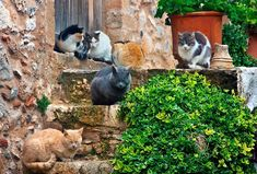 """""""Siesta time for the cats of Monemvassia"""" by Hercules Milas   Redbubble Sleepy Cat, Canvas Prints, Art Prints, Hercules, Decorative Throw Pillows, Chiffon Tops, Greek, Cats, Art Impressions"""