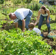 Blog Ogrodniczy | Poradnik Ogrodniczy od Sadowniczy.pl - drzewa owocowe, nasiona, iglaki z dostawą do domu Hobbies For Women, Fun Hobbies, Starting A Garden, Seed Starting, Garden Projects, Garden Tools, Bermuda Grass, Flower Mound, Top Soil