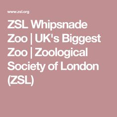 ZSL Whipsnade Zoo - the Uk's biggest zoo. Buy tickets, view visitor information, find out what's on and meet some of the world's most exotic animals. Buy Tickets, Exotic Pets, Day Trips, Cambridge, Places To Visit, London, Ideas, Big Ben London, One Day Trip