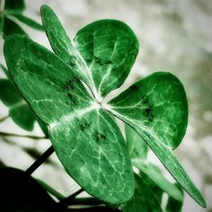 A little luck, by Blas Torillo #Instagram / #Pinterest #Foto #Photo /