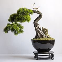 A hand-made tree in the Dragon Studio Plant Pots, Potted Plants, Artificial Tree, Babyshower, Landscape Design, Greenery, Dragon, Polish, Studio