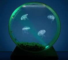 Amazing Gadgets jelly fish aquarium (Interior design, home decor, fun, creative, ideas, inspiration, amazing, different, interesting, gadgets, inventions)