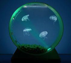 Amazing Gadgets jelly fish aquarium (Interior design, home decor, fun, creative, ideas, inspiration, amazing, different, interesting, gadgets, inventions)