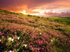 Beautiful Nature of California | Beautiful Places - Geniusbeauty.com: Magazine for Beautiful Women