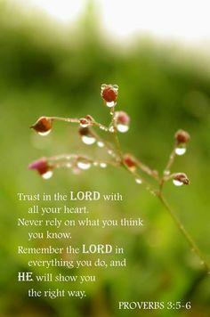 Proverbs 3:5-6   https://www.facebook.com/photo.php?fbid=10151753153288091