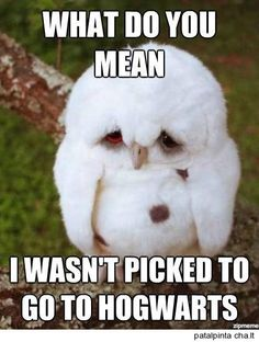 Top 25 Funny Animals Photos and Memes   Quotes and Humor Awww... He... She... It? Idk... Looks so sad