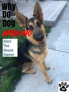 YOUR NEW PUPPY BIBLE? #dogtrainingtips Police Dog Training, Agility Training For Dogs, Best Dog Training, Dog Agility, Crate Training, Dog Barking At Night, Stop Dog Barking, Petsmart Dog Training, Puppy Toilet Training