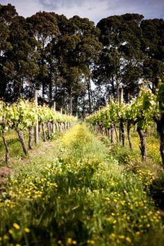 Millton Vineyards & Winery • NZ Wine