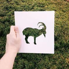 Animal Paper Silhouettes by Nikolai Tolstyh