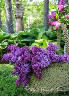 Purple and Lilac Flowers Lilac Flowers, Spring Flowers, Beautiful Flowers, Purple Lilac, Dark Purple, Purple Roses, Deco Floral, Lily Of The Valley, Beautiful Gardens