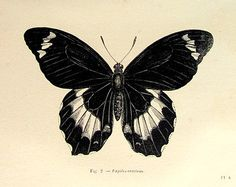 1860 antique moths butterflies print original by LyraNebulaPrints