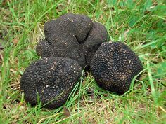 """ Truffles: The Most Expensive Food in the World "" Most Expensive Food, Luxury Food, Exotic Plants, Food Industry, World Records, Alternative Health, Luxury Life, Fungi, Eating Well"