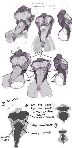 dinamic pose anatomy