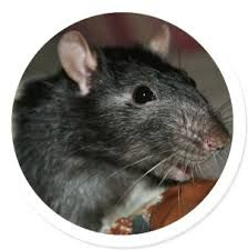 http://www.pestsolutions.co.uk/  Get mouse control in your house. Pest solution by experts .Reclaim your houses from pests.  #mousecontrol #pestscontrol