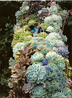 Garden of Thomas Hobbs, Vancouver: garland of echeverias, sempervivums and other succulents, studded with coloured-glass ornaments for dramatic effect, is growing along the staircase leading up from the terrace.