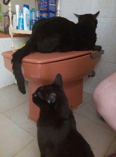 Compañía hasta en el baño