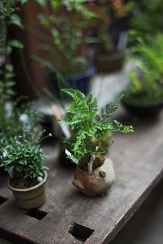 Small Green - Miniature Gardening - Tiny Bonzai
