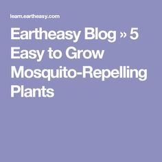 Eartheasy Blog » 5 Easy to Grow Mosquito-Repelling Plants
