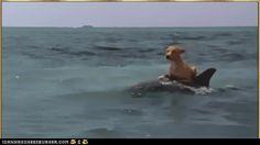 Funny Animal Gifs - Animal Gifs: Hitchin' A Ride