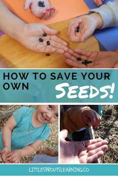 It's fun and easy to save your own seeds and it saves you money!