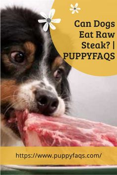 Visit here to check out can dogs eat raw steak on PuppyFAQS Blog! If you are looking to find out if it's safe to give your puppy raw meat for dinner, then this is the blog post for you! For the definitive guide on Can Dogs Eat Raw Steak, click to be directed to the PuppyFAQS blog. If you still need help after reading our article on whether or not your pooch can eat apricots, please leave us an email at liz@puppyfaqs.com and we'll get back as soon as possible. Happy pup parenting! :) Dog Eating, Eating Raw, Wet Dog Food, Can Dogs Eat, Healthy Fats, Dog Food Recipes, Steak, How To Find Out, Parenting